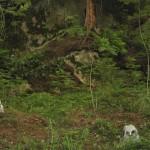 """NELJÄ METSÄNVARTIJAA 2006<br /> Olen yrittänyt jäljentää teokseeni sen tunteen, jonka olen kokenut lähtiessäni etsimään metsästä pöllöpoikuetta selvillä """"nuoteilla"""". Katse harhailee oksistossa ja sammaleiden keskellä yleensä pitkään, ennen kuin pöllöt löytyvät. Kun katseemme kohtaavat ja poikasten silmät tapittavat herkeämättä minuun, tiedän tulleeni jo kauan sitten havaituksi."""